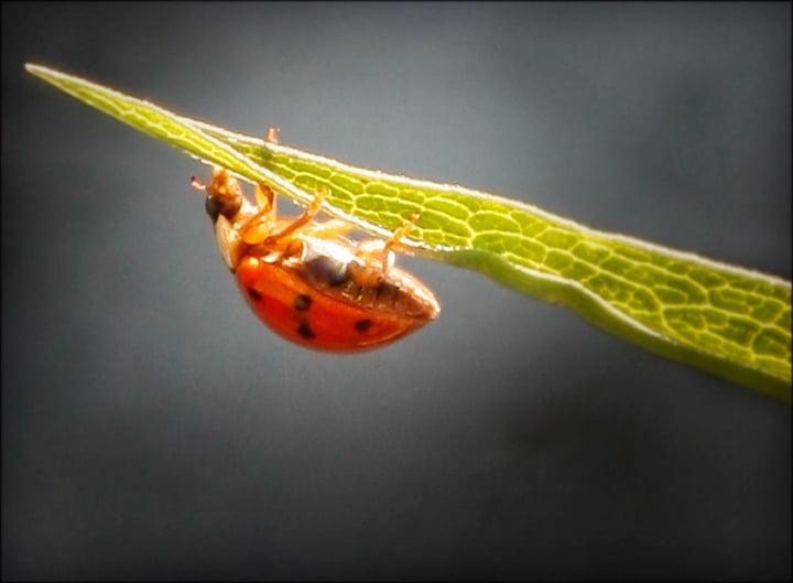 Courage - lady bug on leaf